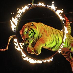 Цирки Тбилисской
