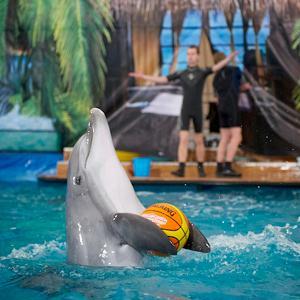 Дельфинарии, океанариумы Тбилисской
