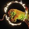 Цирки в Тбилисской