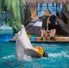 Дельфинарии, океанариумы в Тбилисской