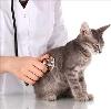 Ветеринарные клиники в Тбилисской
